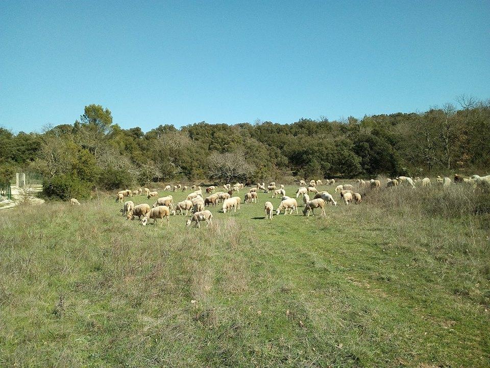 les moutons au bagades 2